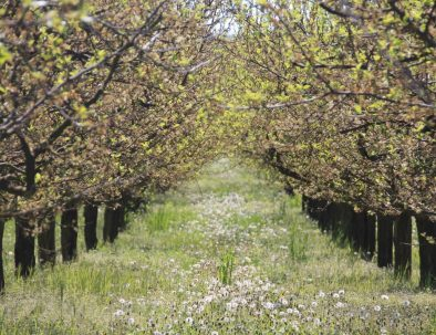 27_Frühling Blütenwanderweg_3